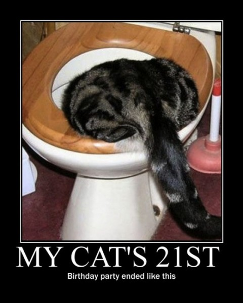 my cat�s 21st birthday party ended like this� zanyjaneycom